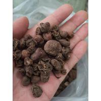 紫背天葵子功效与作用,紫背天葵产地批发价格多少钱一公斤
