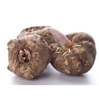 基地供应【优质脱毒魔芋种子】,等级1,发芽率≥90%,俊发魔芋公司免费测土选地 签合同保障售后及回收