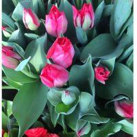 批发工程四季球根郁金香花卉种球多种花色盆栽花卉可水培植物