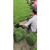 江西草坪价格/草皮规格/促销