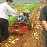 专业生产土豆收获机 自走式大蒜挖掘机 新型花生收获机