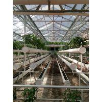 一亩地的无土栽培需要投资多少钱 玻璃无土栽培蔬菜