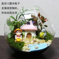 公主小盆景制作海洋迷你微景观清新空中永生花中国风苔藓微观景