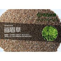 淮安画眉草草坪种植技术