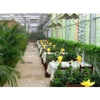 青州鑫泽温室供应新乡玻璃生态温室餐厅