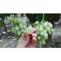 广州一手货源批发进口水果南非无籽青提Sugraone原箱9斤装5箱起批