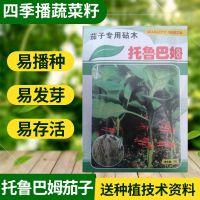 日本进口茄子嫁接砧木种子 托鲁巴姆茄子 托鲁巴姆种子5克装
