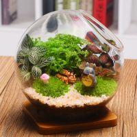 苔藓微景观盆栽生态瓶创意植物微缩景观diy玻璃植物迷你盆栽摆件