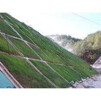 路堑边坡平台植灌木 昭通市边坡常用种籽护坡