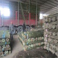 江西2.5米小竹竿批发,原产地发货,第一手货源