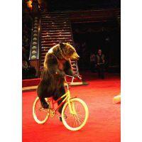 租赁大象表演的价格是多少?动物马戏团 人气爆点