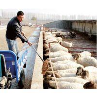 技术专家推荐的提高羔羊成活率有效措施