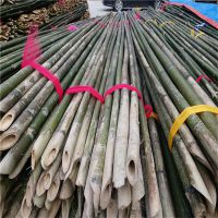 大量供应甘肃玉门、瓜州绑扶枸杞树苗用的3米4米5米竹杆 现货供应