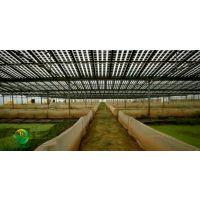 湖北天泽惠丰生态农业发展有限公司:如何让青蛙生长更好