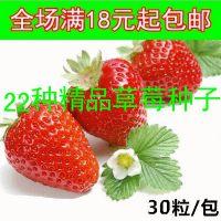 四季花草盆栽 红颜牛奶草莓种子 易活阳台绿植易种蔬菜籽水果植物