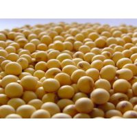 注意啦巴西非转基因大豆允许进口了