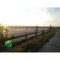 湖北天泽惠丰生态农业发展有限公司-如何选择合格的青蛙种苗?