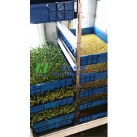 新式全自芽苗菜机一机多用|花生芽机|宏大芽苗菜机包教技术