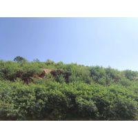 铜仁荒山植树造林绿化草种草籽灌木种子批发