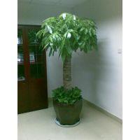 北京绿植租赁公司北京花卉出租公司