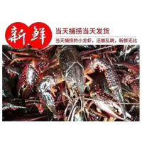 常州龙虾苗养殖培训中心