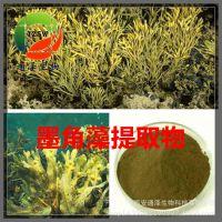 墨角藻提取物 墨角藻碘0.1% 0.3% 厂家优质现货