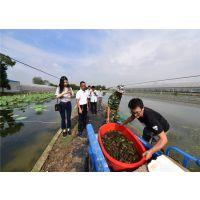 澳洲淡水龙虾加盟澳洲淡水龙虾养无锡龙澳生态农业发展有限公司