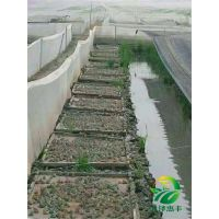 湖北天泽惠丰生态农业发展有限公司:青蛙养殖市场前景怎么样
