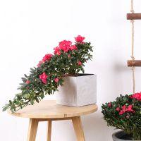 武汉绿植花卉出租租摆,写字楼办公室盆栽维护销售服务