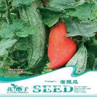 批发蔬菜瓜果24种南瓜种子   观赏可食用 老鼠瓜种子(约3粒)