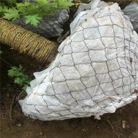 一手货源现挖现打包的苗木铁丝网,树根网,包土球网