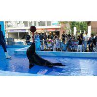 海狮表演企鹅展出租租赁 海豚出租马戏团杂技表演出租租赁公司