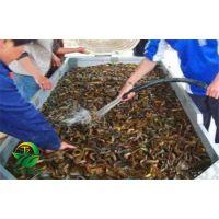 湖北天泽惠丰生态农业发展有限公司-养殖泥鳅预防生病的方法