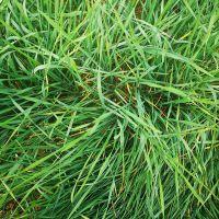 泰安蚂蚱养殖技术-山东大昆农业-蚂蚱养殖技术条件