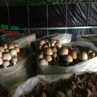 一台高配香菇烘干系统需成本多少