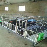 浙江龙泉复合母猪产床可折叠猪床安装反馈