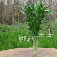 富贵竹室内客厅直竹转运竹水培植物大盆栽竹子开运竹吸甲醛 包邮