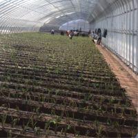 温室大棚南北跨和东西跨对于种植蔬菜有什么不同