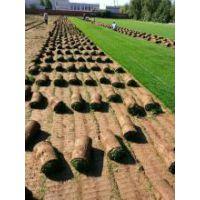 混播草籽|种植草皮|天桥草坪