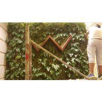 绿植墙多少钱一平米,西安室外绿植墙公司-金森造景仿真植物