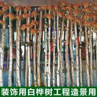 白桦树装饰树段树桩装饰白桦树服装橱窗装饰商场布置白桦树树干