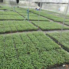 芳诚温室 蔬菜育苗大棚 简易育苗温室大棚 长沙育苗大棚承建