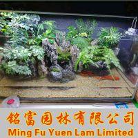 鱼缸石批发 广东青龙石批发厂家 水族青龙石产地 鱼缸造景石