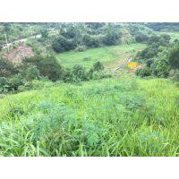 铜仁在矿山我们要选用什么草种灌木种子进行护坡