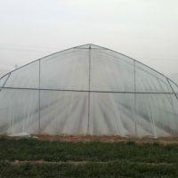 食用菌香菇农用大棚管无缝镀锌大棚管件香菇养殖农业大棚管建设
