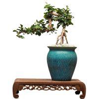 一件代发福建茶盆景悬崖式下山老桩禅意茶台室内办公室绿植花卉植