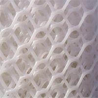 塑料牵伸网 白色踩踏网 养殖网厂家