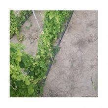 滴灌山药种植水肥一体化设备多少钱一亩