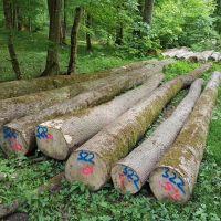 金威木业德国,法国白蜡木 原木 水曲柳 蜡木 进口实木 木材 欧洲原木 可锯切3000方