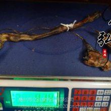 海狗鞭 海狗肾多少钱一条